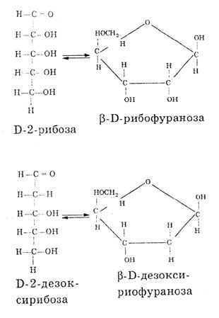 Формулы углеводов, входящих в состав нуклеиновых кислот